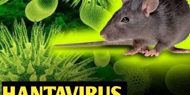 ویروس که بعد از کرونا پیدا شده